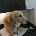 Photos: 犬から逃げ惑うかいと