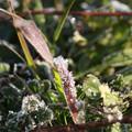 Photos: 霜の朝019
