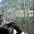 Photos: 自然湖