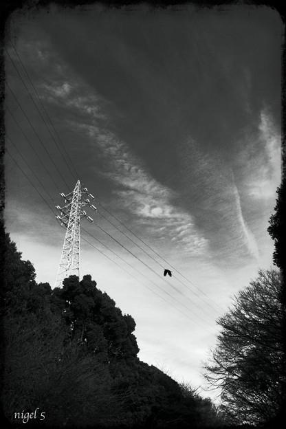 駒沢公園の雲 #2