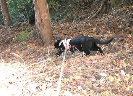 チャンプの紅葉狩り