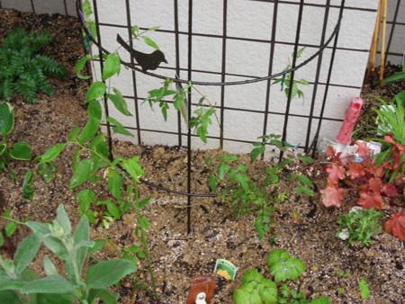 2013年5月11日 TさんIさんの自由花壇