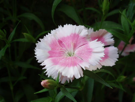 2013年5月13日 Kさん自由花壇