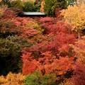 Photos: もみいづる東福寺