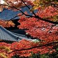Photos: もみいづる東福寺 #2