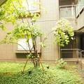 ガーデン渋谷氷川~庭5