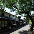 写真: 倉敷美観地区の木陰2012!