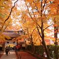 写真: 黄葉の参道!2012k