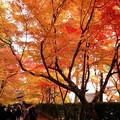 写真: 紅葉の参道!2012k