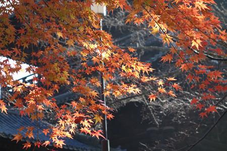 晩秋のモミジ!2012n