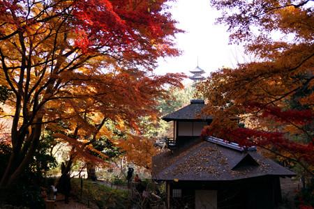 紅葉が彩る茶室!2012