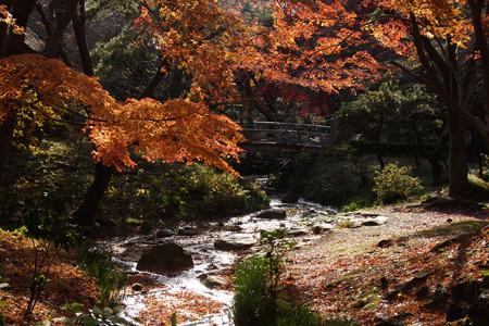 黄葉と小川!2012