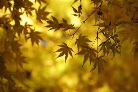 黄葉にモミジの風景!2012