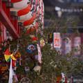 Photos: 福笹、鎌倉の本覚寺!2013