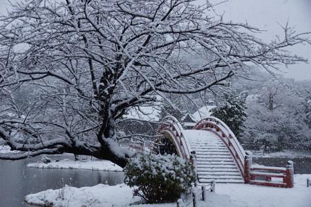 称名寺庭園の雪景色!2013