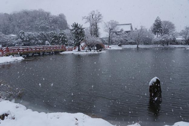 Photos: 雪の称名寺全景!2013