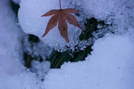雪に散紅葉!201301