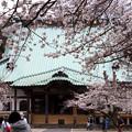 Photos: 鎌倉最大の本堂にも桜!130323