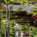 Photos: 海蔵寺山門の新緑!130512