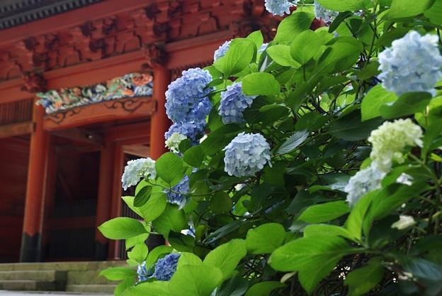 二天門と紫陽花!130629