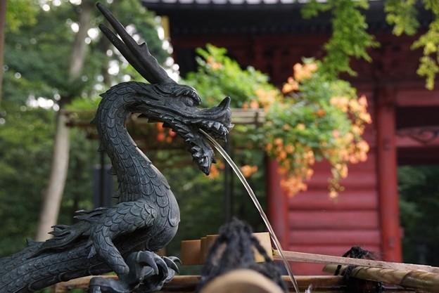 龍と朱色のノウゼンカズラ!130715