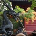 Photos: 龍と朱色のノウゼンカズラ!130715