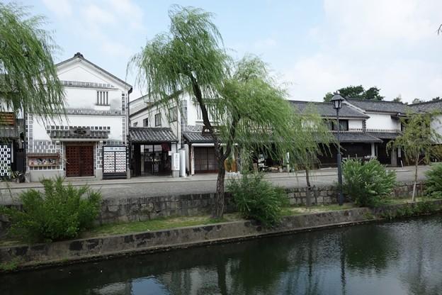 写真: 倉敷美観地区の柳!130806