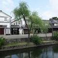 Photos: 倉敷美観地区の柳!130806