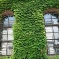 写真: 倉敷の蔦の倉庫!130806