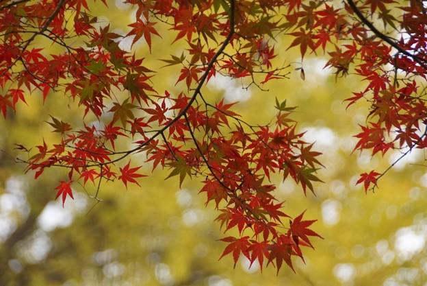 写真: 紅葉の姿131109-186