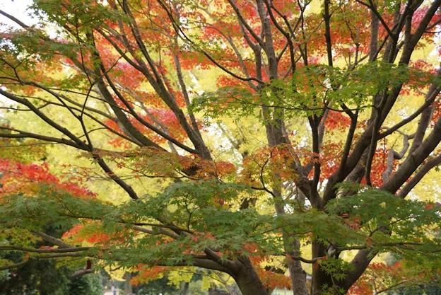 紅葉と黄葉と緑131109-194