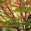 写真: 紅葉と黄葉と緑131109-194