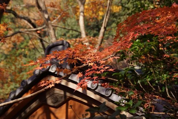 蓮華寺の紅葉131201
