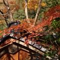 写真: 蓮華寺の紅葉131201