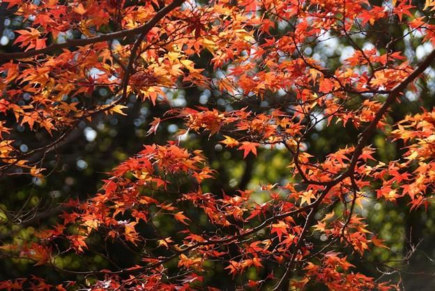 蓮華寺の紅葉見頃31201