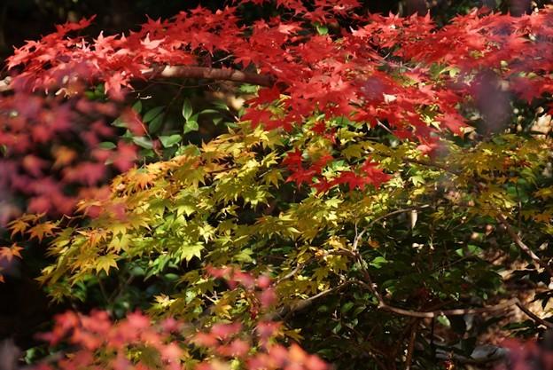 蓮華寺の紅葉と黄葉131201