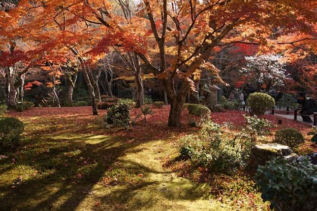 圓光寺の晩秋庭園!131201