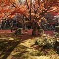 写真: 圓光寺の晩秋庭園!131201