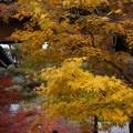 写真: 永観堂山門の黄葉!131201