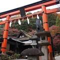 Photos: 愛宕山の晩秋の鳥居!131202