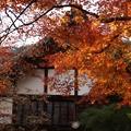 写真: 常寂光寺の黄葉2!31202