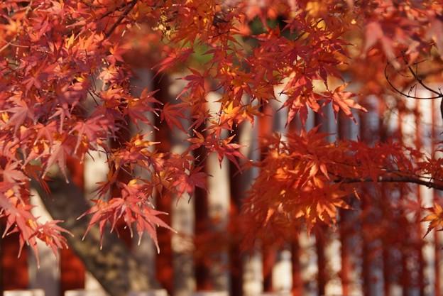 嵯峨野の紅葉!131202