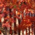 写真: 嵯峨野の紅葉!131202