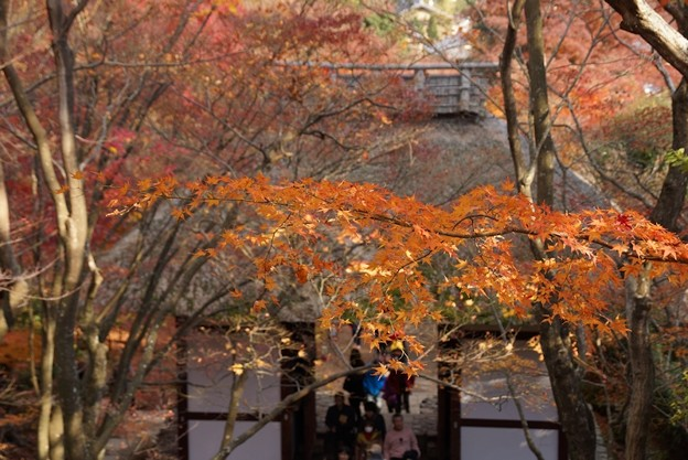 Photos: 常寂光寺の黄葉4!131202