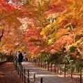 写真: 紅葉の参道2!131202