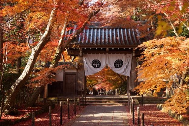 写真: 黄葉の門!131202