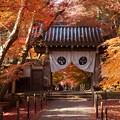 Photos: 黄葉の門!131202