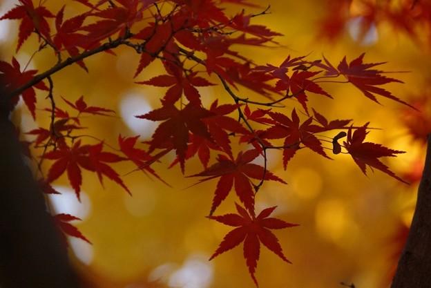 紅葉と黄葉2!131202