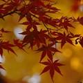 写真: 紅葉と黄葉2!131202