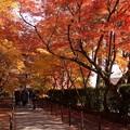 写真: 紅葉の参道5!131202